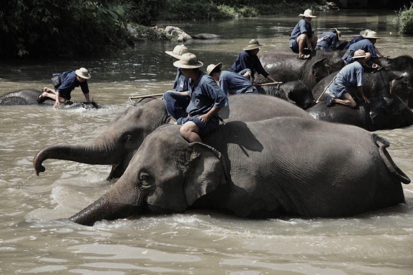 Thailand photos Elephants 1