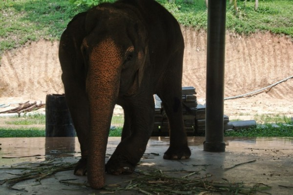 Thailand photos Elephants 4